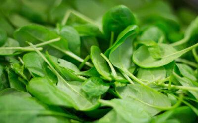 Espinacas y sus propiedades nutricionales